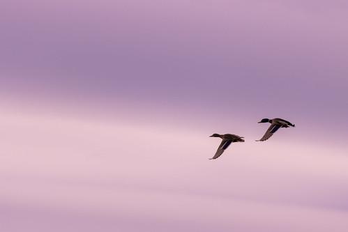 Let's fly together!