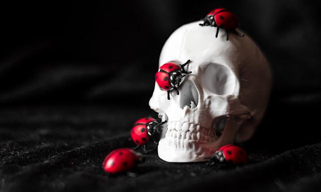 Skullybugs