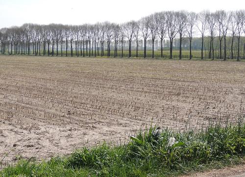 Landscape in the Betuwe