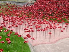 Hereford - Poppies Installation