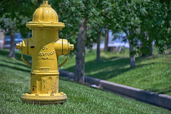 Fire plug in the park