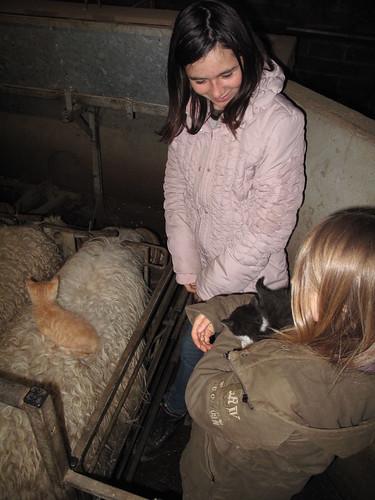 03/05/2013 brebis chats et enfants !
