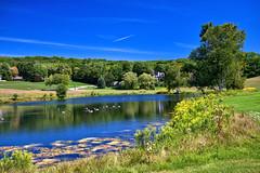 Ducks at Birchwood Farm Estates