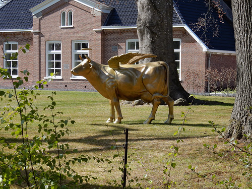 Sacred winged golden cow (N4720)