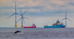 Aberdeen Bay.