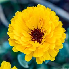 confinement fleurs