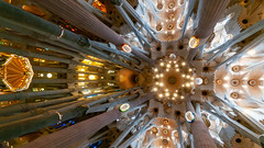 Celing inside La Sagrada Familia - Barcelona