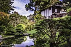 Etats-Unis San Francisco Japanese Tea Garden Octobre 2019
