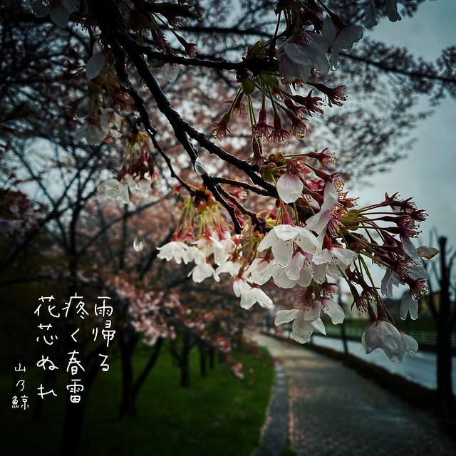 Photo:雨帰る 疼く春雷 花芯ぬれ[山乃鯨] #haiku #photohaiku #poetry #micropoetry #フォト俳句 #写真俳句 #snapseed #phonto #jhaiku #poem #俳句 #shortpoem #japanese #actuallyautistic #asd #春 #spring #autismacceptance #autismawareness #桜 #autismspectrumdisorder #3lines #autism #季語 By Atsushi Boulder