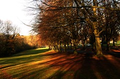 After Covid ...Autumn will bring colours to souls
