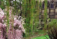 "Cincinnati - Spring Grove Cemetery & Arboretum ""Springtime Curtain Over Dexter Mausileum"""