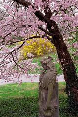 "Cincinnati - Spring Grove Cemetery & Arboretum ""A Springtime Walk"""