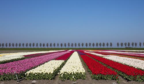 Noord Holland 22 april 2020
