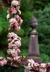 """Cincinnati - Spring Grove Cemetery & Arboretum """"Hamlet Crabapple Blooms.....Life Goes On"""""""