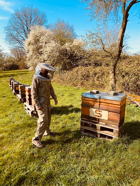 Städtische Werke Bienen