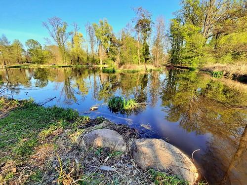 Pond III