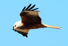 2020 Birds of Prey