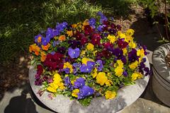 Brookside Gardens 22 Apr 2020  (211)