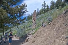 Gated Petrified tree at Yellowstone