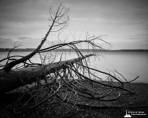 Fallen Tree on the Beach, Kopachuck State Park, Washington, 2020