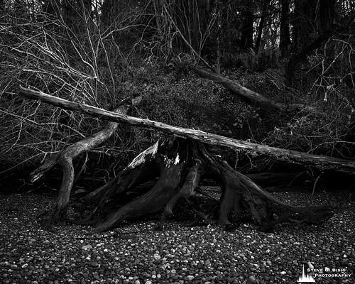 Beach Meets Forest, Kopachuck State Park, Washington, 2020