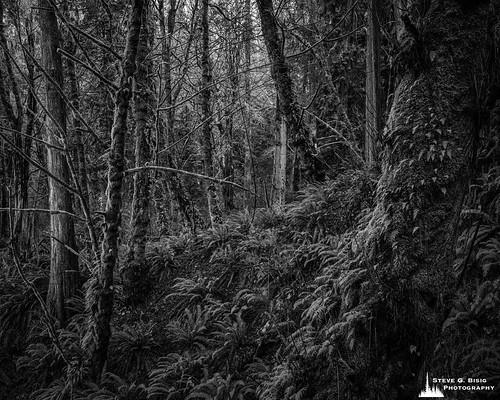 Forest, Kopachuck State Park, Washington, 2020
