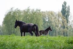 Tom's horses
