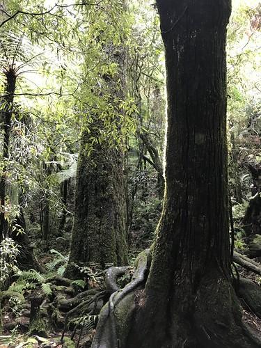 Elvish Trees of Rivendell
