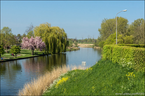 The Betuwe, the blossom region of the Netherlands