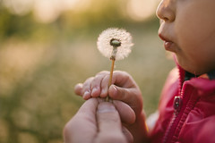 A cute young girl blowing dandelions.