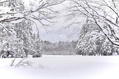 Winter in Myoko