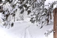 Myoko snow shoe trail