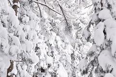 Myoko's winter trees