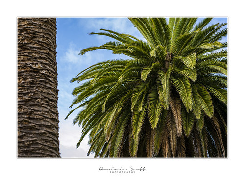 Palm Drive - Palmerston North Esplanade