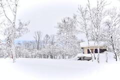 Imori-ike Pond in winter