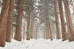Togakushi Shrine in winter