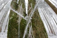 Frost Nadeln