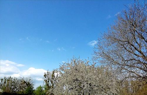 Soleil et ciel bleu de printemps