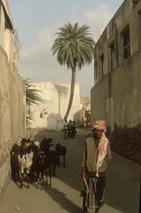 200612_Yemen_scan_58