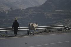 200612_Yemen_scan_39