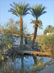 La campagne autour de Medinet Habou, Thèbes ouest (Egypte)