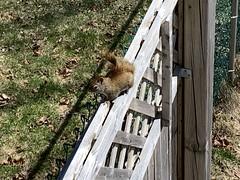 Squirrel sighting