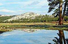Peaceful Reflection, Tuolumne Meadows, Yosemite 2015
