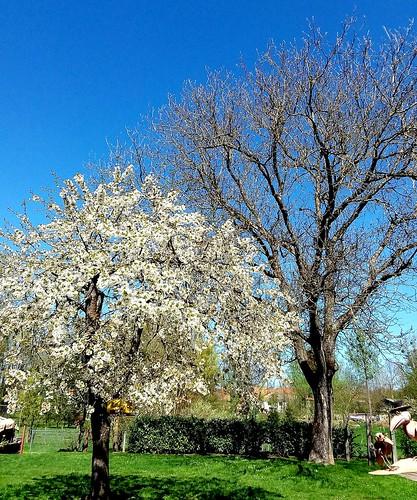 C'est beau , le printemps 😍