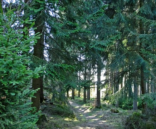 Waldspaziergang - Walk in the forest