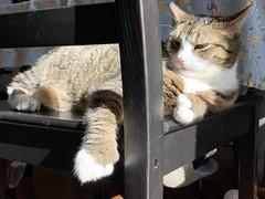 Amelia #cat in sunbeam