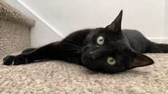 Martha #cat