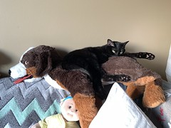 Martha #cat on IKEA HOPPIG (plush dog)