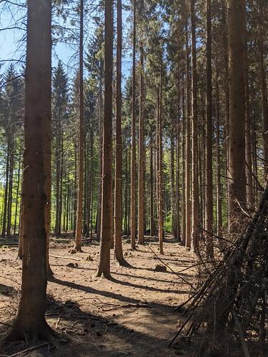 Der moderne Trockenwald