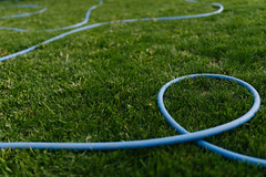 Blue watering pipes on green grass.